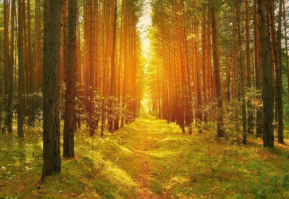 sunny-forest-in-early-morning-sun-lights-110313b0e9b7b5b8